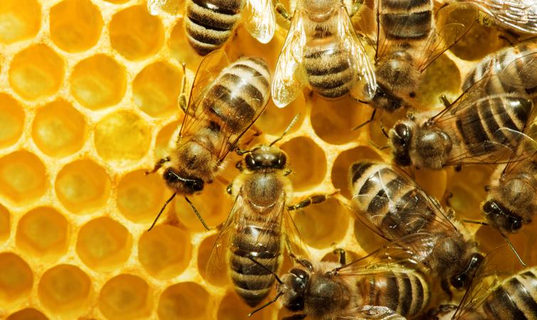 П'ять дивовижних речей, які можуть робити бджоли   Українська ...