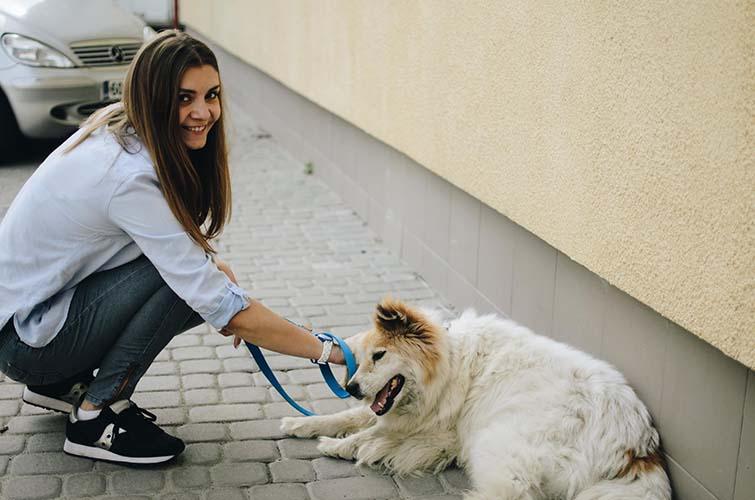 7a351ca seniordog 2 - 7 причин задуматься над тем, чтобы усыновить старого битого пса